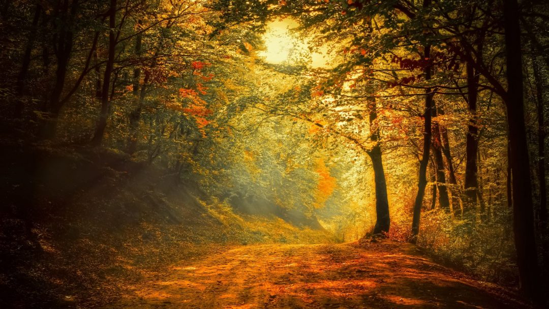 Chemin en campagne